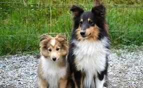 Combien faut-il prévoir pour faire vacciner son chien ?