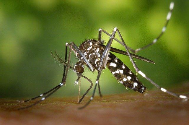 3 astuces naturelles pour chasser les moustiques