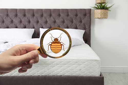 Le choix d'une entreprise pour traiter les punaises de lit